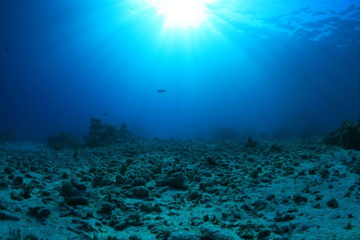 Merenpohja on voimaksa hiilinielu. Kuva: Shutterstock