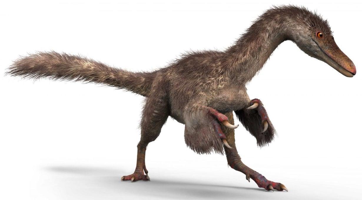 Hännänpää saattoi kuulua tällaiselle coelurosaurukselle. Kuva: Chung-tat Cheung and Yi Liu