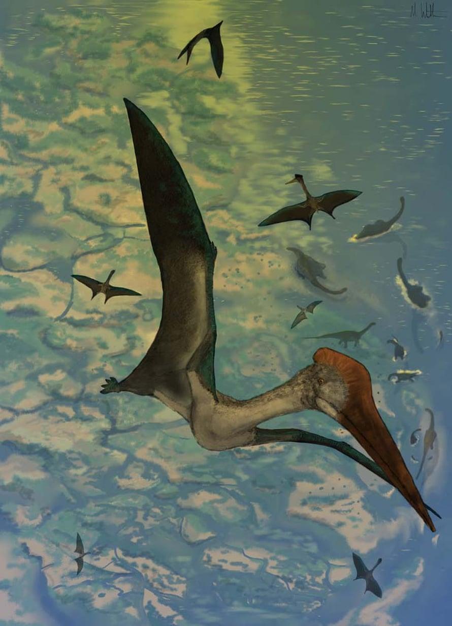 Suurimman lentoliskon Quetzalcoatluksen siipien kärkiväli oli tuoreimman arvion mukaan kymmenisen metriä.