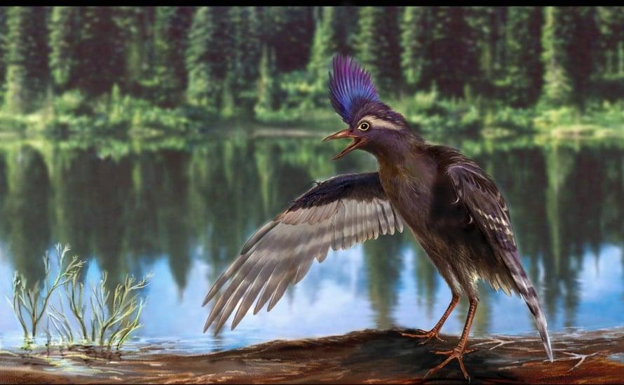 """Archaeornithura meemannae oli varhaisin tunnettu lintu. Kuva: <span class=""""photographer"""">Zongda Zhang</span>"""