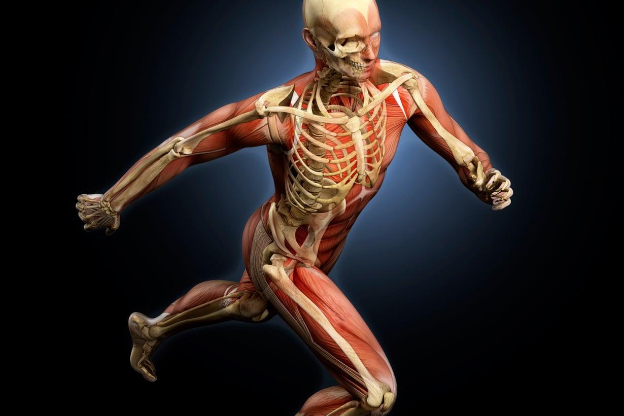 Ihmiskeho on evolutiivista haitekia päästä varpaisiin. Kuva: Getty Images