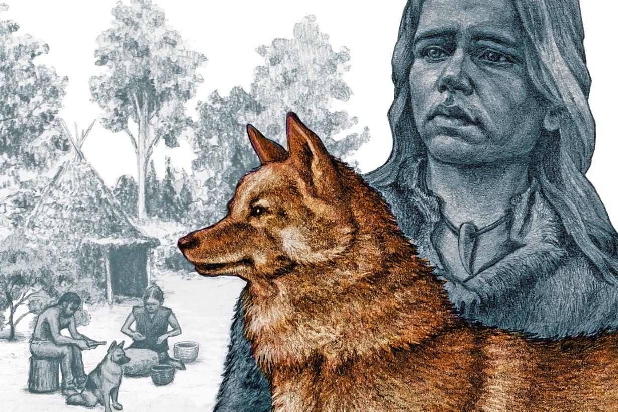 Perimästä päätellen pystykorva on alkukantainen rotu ja kuuluu maailman vanhimpiin koiriin. Kuva: Olli Österberg