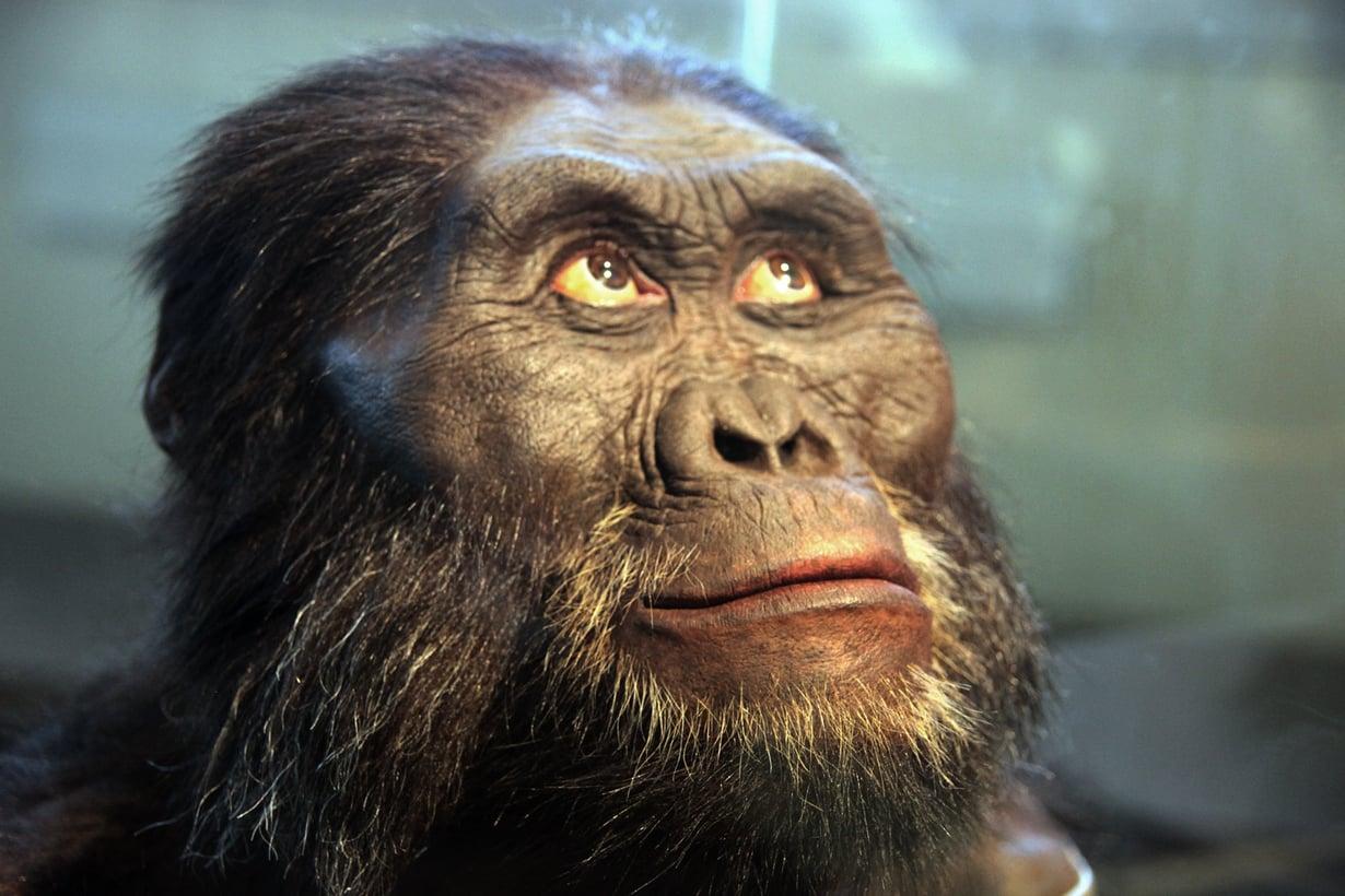 Ensimmäiset sepät olivat ehkä tämän näköisiä. Kuvassa Smithsonian-instituutin hahmotus afarinapinaihmisestä. Kuva: Tim Evanson
