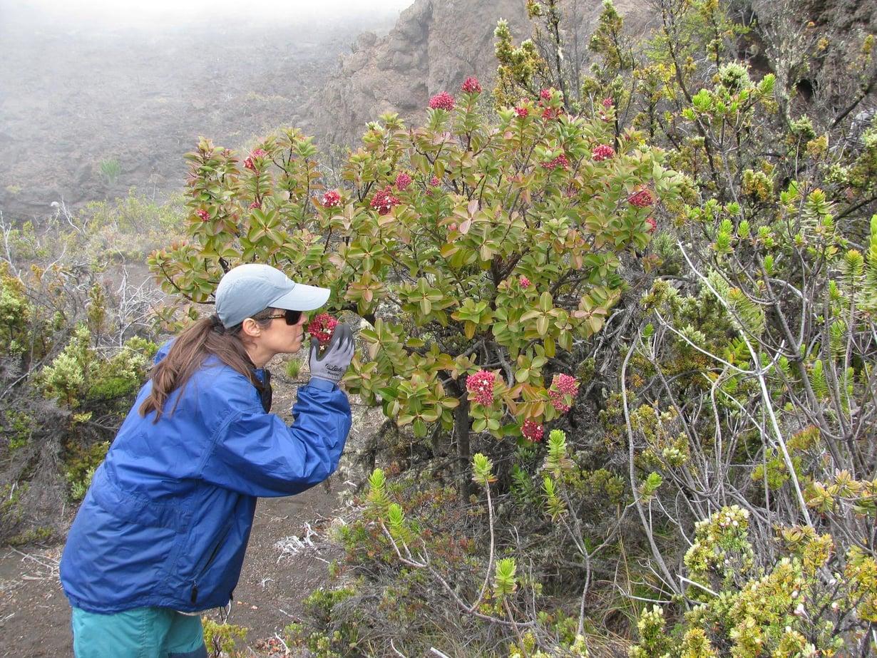 Hyvä juttu, jos hajuaisti toimii. Kuva: Forest and Kim Starr