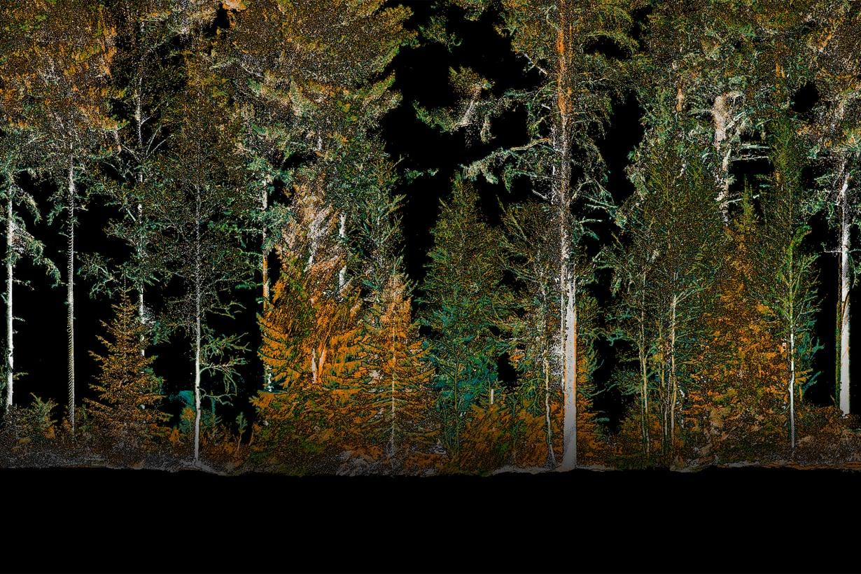 Akhka-reppukeilain näyttää puiden paikat, pituuden, oksiston rakenteen, aluskasvillisuuden ja maan pinnanmuodot. Kuva: Antero Kukko