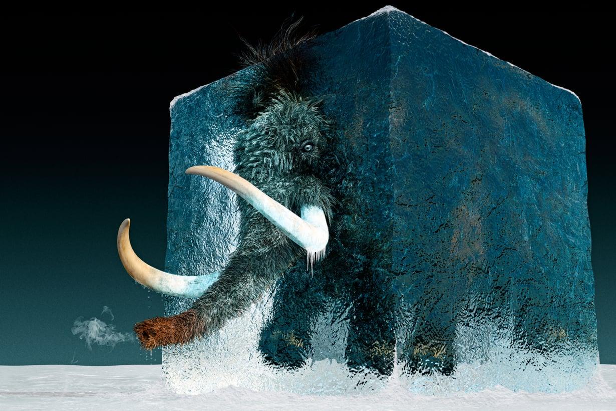 Viimeinen villakarvamammutti asteli maapallolla 4 000 vuotta sitten. Mahdollisen paluunsa laji aloittaa todennäköisimmin norsumammuttina. Kuva: iStock