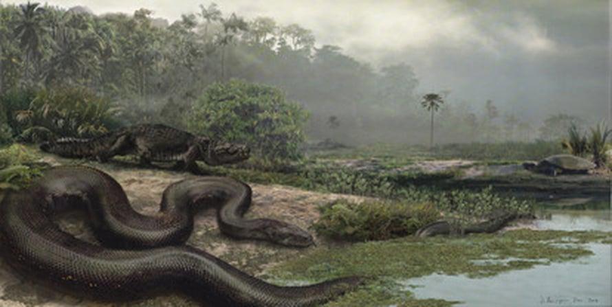 """Taiteilijan näkemys Titanoboa cerrejonensis -käärmeestä. Boakäärme vietti ilmeisesti suuren osan elämästään veden äärellä. Kuva: <span class=""""photographer"""">Jason Bourque, University of Florida.</span>"""