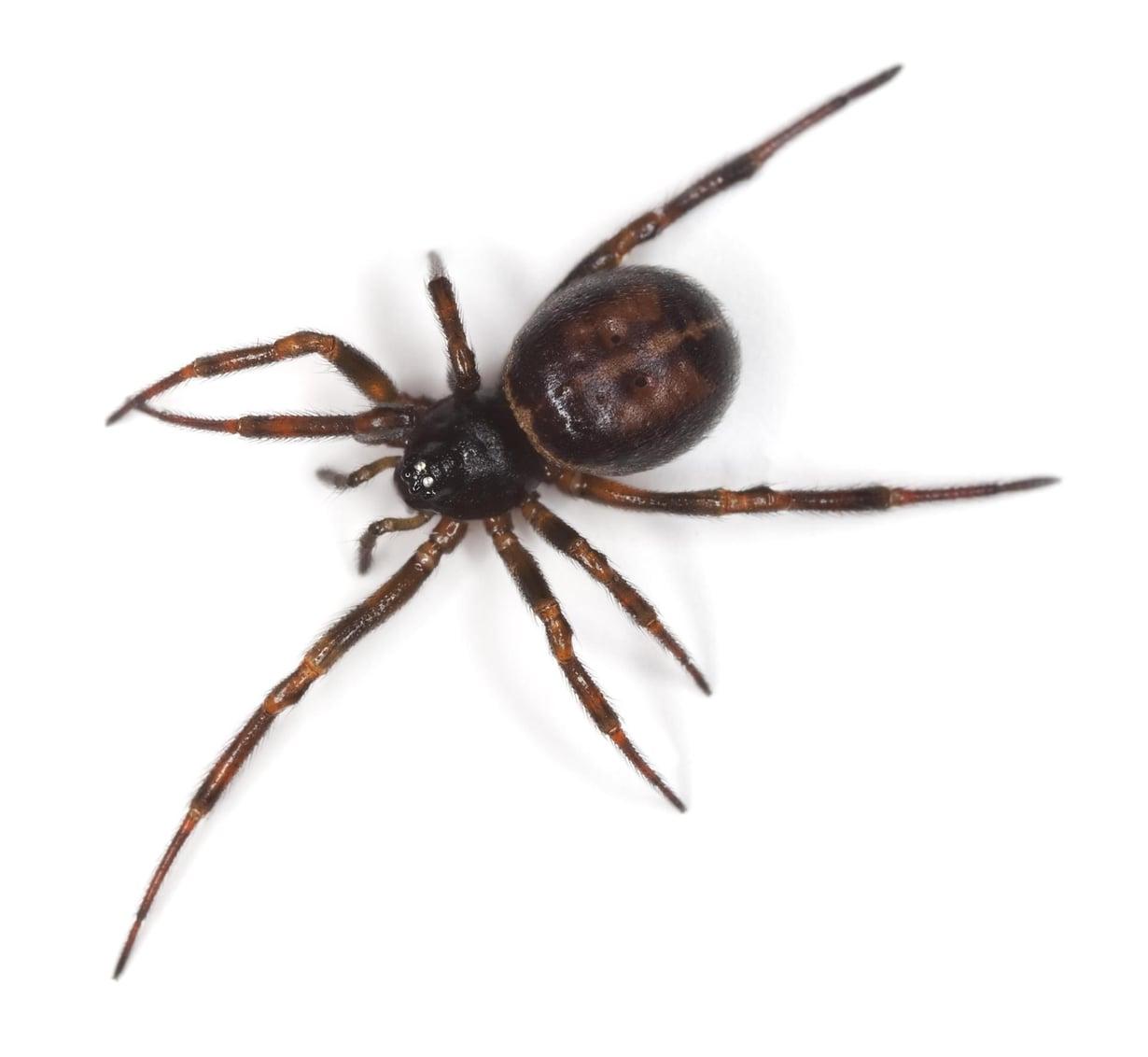 Jotkut kauhistuvat hämähäkkejä. Kuva: Shutterstock