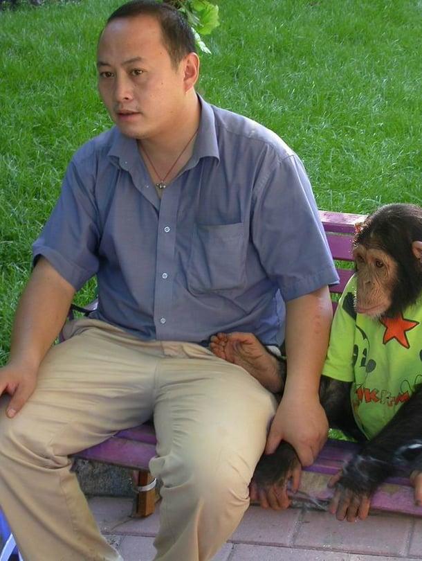 """Ihmisen ja simpanssin geenit poikkeavat vain hippusen toisistaan. Kuva: <span class=""""photographer"""">Wikimedia Commons</span>"""