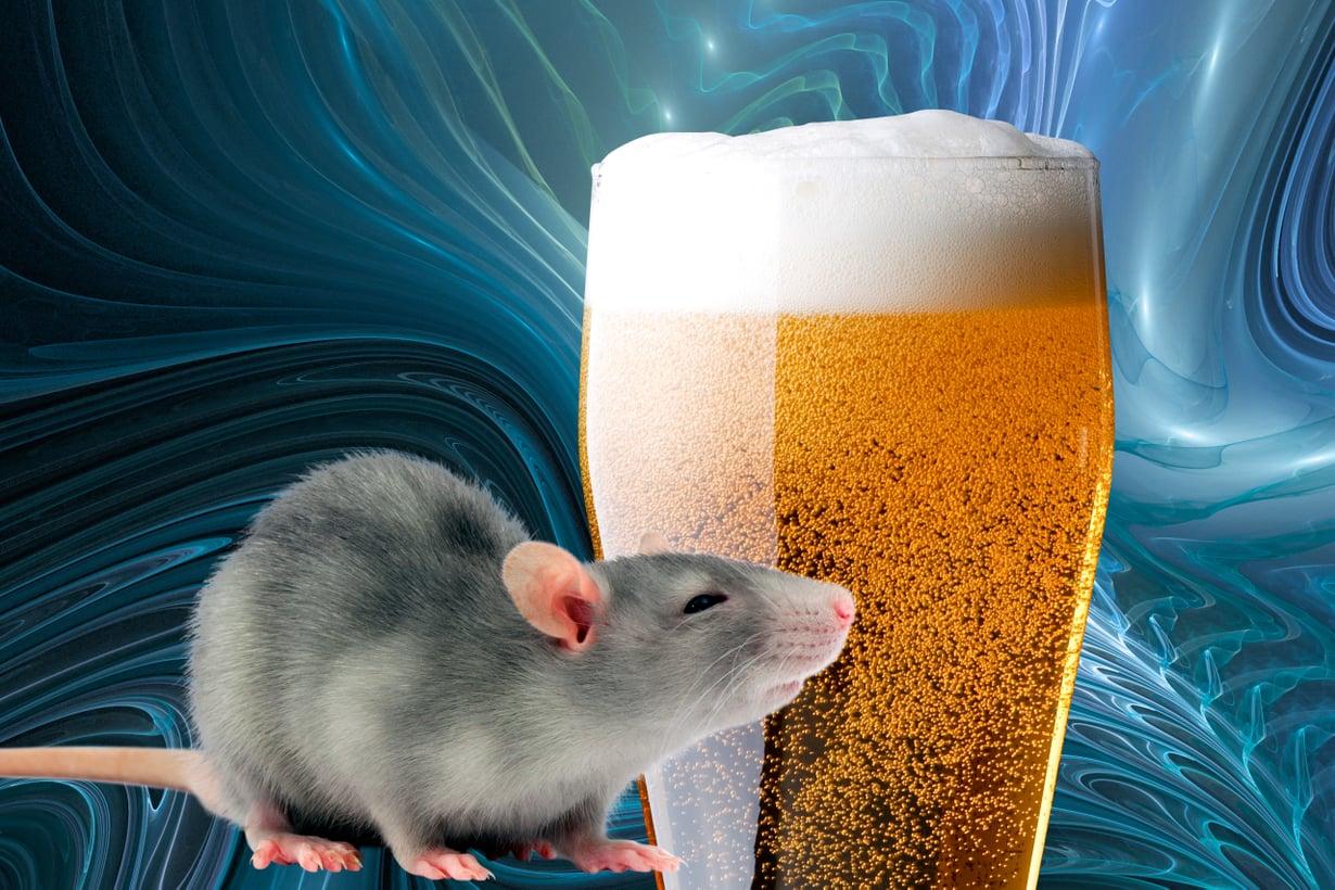 Pää kuin pää, aivosolut palautuvat perustilaansa kivuliaasti. Kuva: Shutterstock
