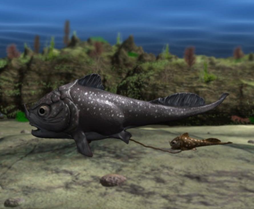 Placoderm-kala ja vastasyntynyt jälkeläinen, taitelijan näkemys. Museum Victoria