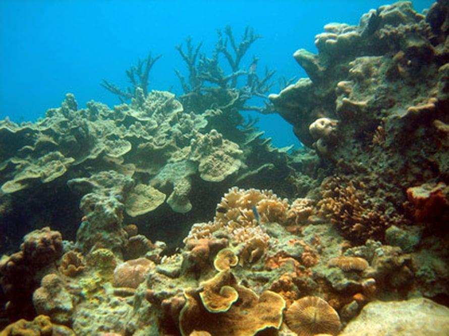 """Ison Valliriutan suojeltuja koralleja. Kuva: <span class=""""photographer"""">Science/AAAS</span>"""