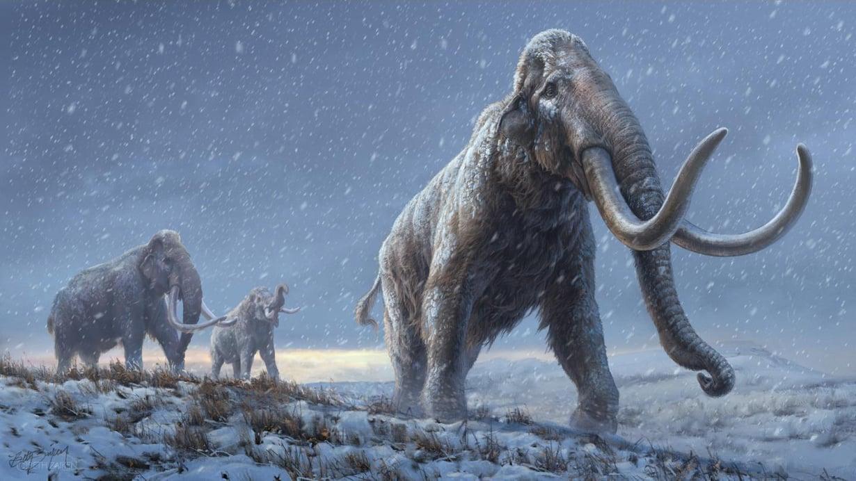 Aromammutti eli Siperiassa ennen villamammuttia. Kuva. Beth Zaiken / CPG