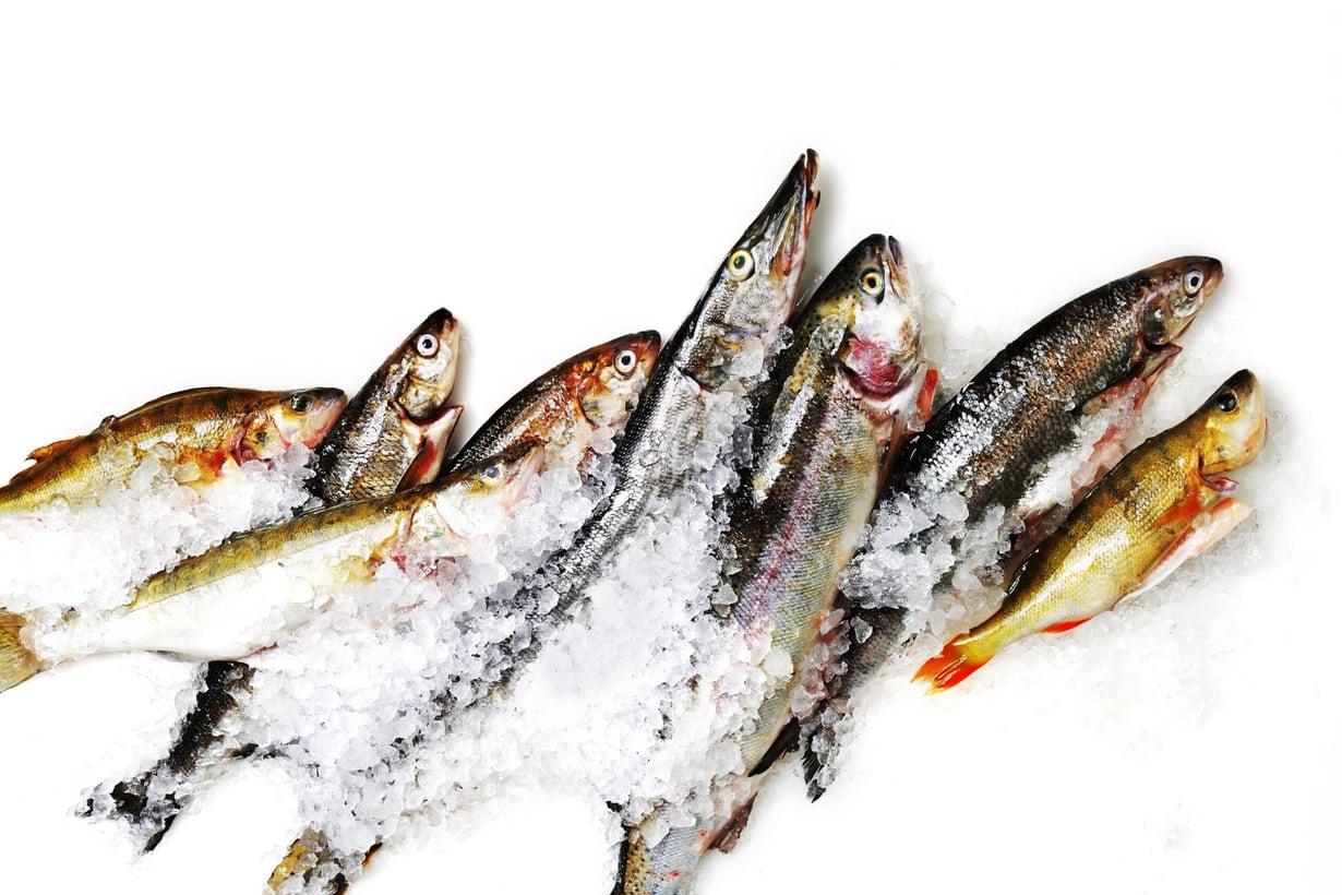 Myös suomalaisiin kaloihin kertyy lääkejäämiä. Kuva: Markku Niskanen