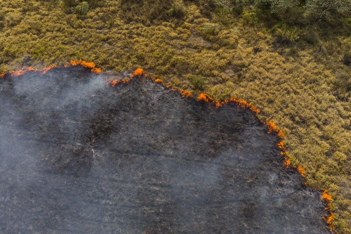 Brasiliassakin palot harvenivat – kunnes metsän raivaus viljelymaaksi kiihtyi uudelleen 2010-luvulla. Kuva Getty Images