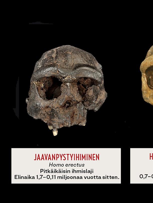 Oma lajimme Homo sapiens syntyi noin 350 000 vuotta sitten. Miten meidän käynee?